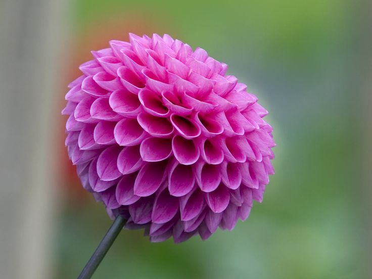 Nature Is Fascinating The Structure Of This Flower So Perfect