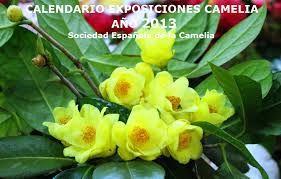 Resultado de imagen de ver flores de camelias