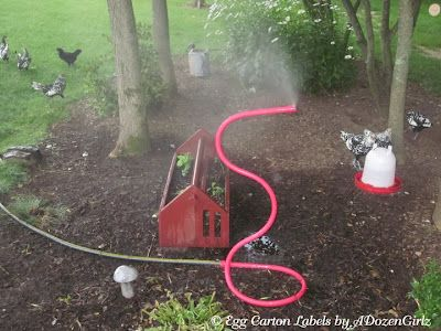 Beat the Heat: Helping Chickens Survive High Temperatures. LOTS of tips and tricks for keeping them cool.