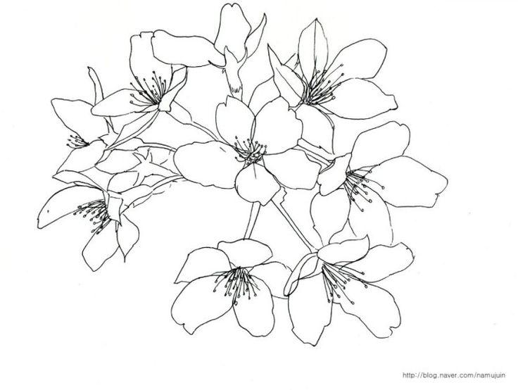벚꽃 그림 : 네이버 블로그