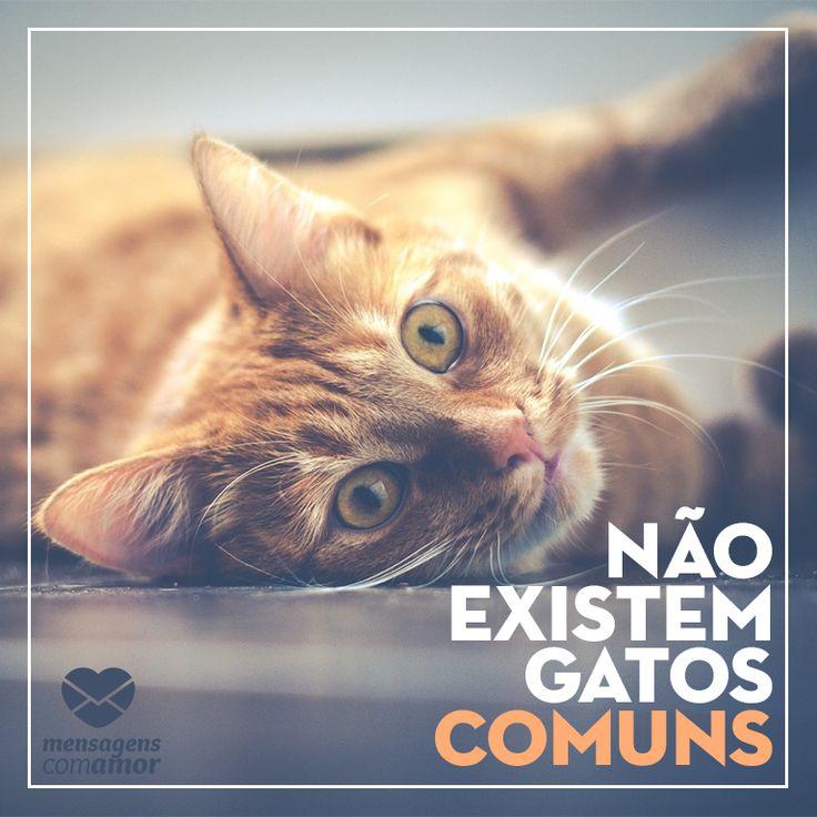 #mensagenscomamor #gatos #frases #animais