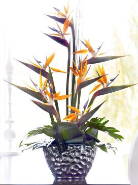 This expertly arranged display of sensational strelitzia is a celebration creativity and colour. With an exotic feel and a contemporary look, this striking arrangement is perfect for making a big impression.<br /><br />Featuring orange strelitzia with green aralea leaves, aspidistra leaves, philodendron and steel grass, all expertly arranged in an elegant silver ceramic planter and presented in luxurious packaging for maximum impact when your gift is delivered.