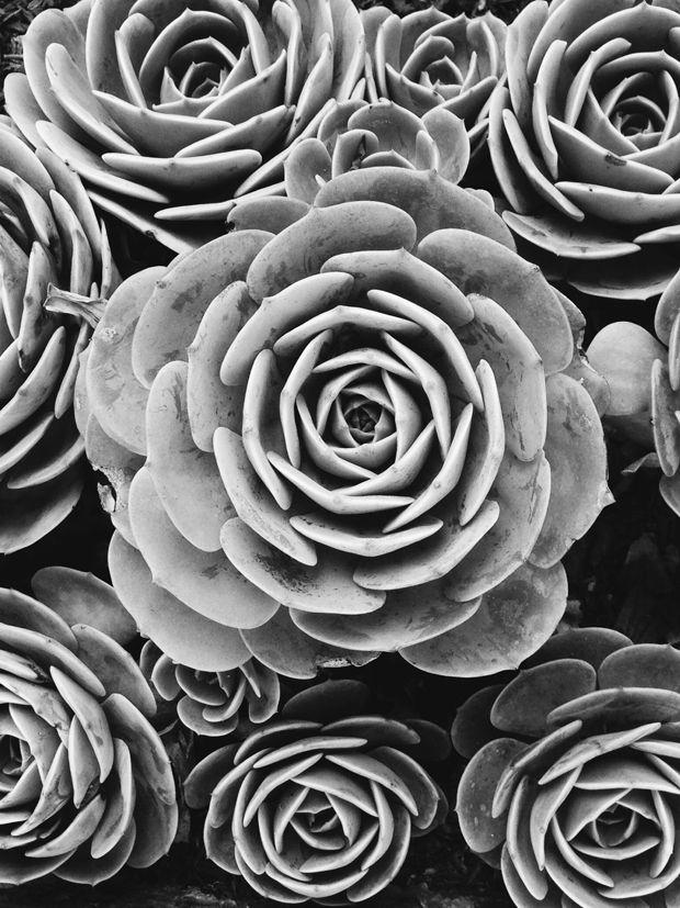 succulents by @justinablakeney