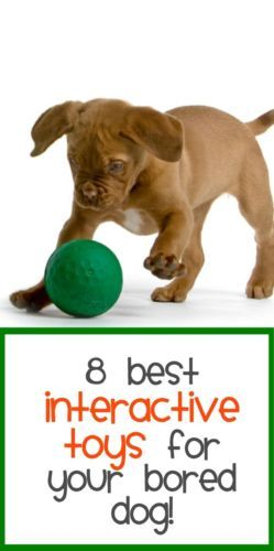 Best interactive toys for your bored dog