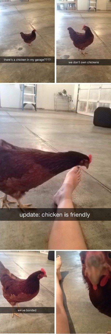 And this poultry bond: | 22 Snapchats That Are Just Really Fucking Funny