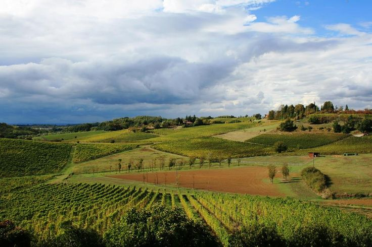 Le colline del Gavi by C. Pellerino; the hills and vineyards of Gavi, Piemonte (Italy)