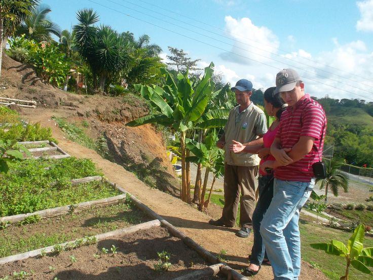 Huertas comunitarias en el turismo del Quindio- únete al programa ejecutivosyturismo@gmail.com