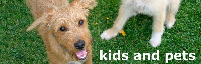 Fake Grass for Dogs makes playtime easy for everyone! #synthetic #grass #lawn