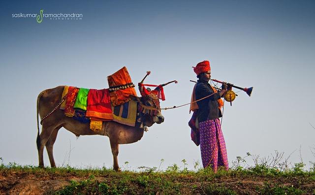 Happy Pongal | பொங்கல் நல்வாழ்த்துக்கள் by NIZHALOVIYAM, via Flickr