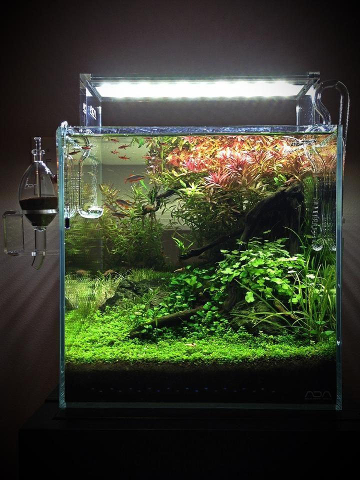 Les 1325 meilleures images du tableau aquarium inspiration for Bocal aquarium