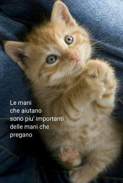 """Aída Vuotto 14 min ·    """"Las manos que ayudan, son más importantes que las manos que rezan""""  https://www.facebook.com/photo.php?fbid=522727227891733"""