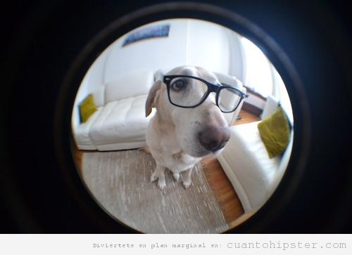 Perro hipster ojo de pez