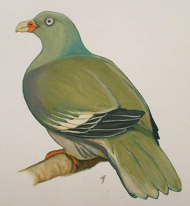 Wild Green Pigeon by Tony Fredriksson
