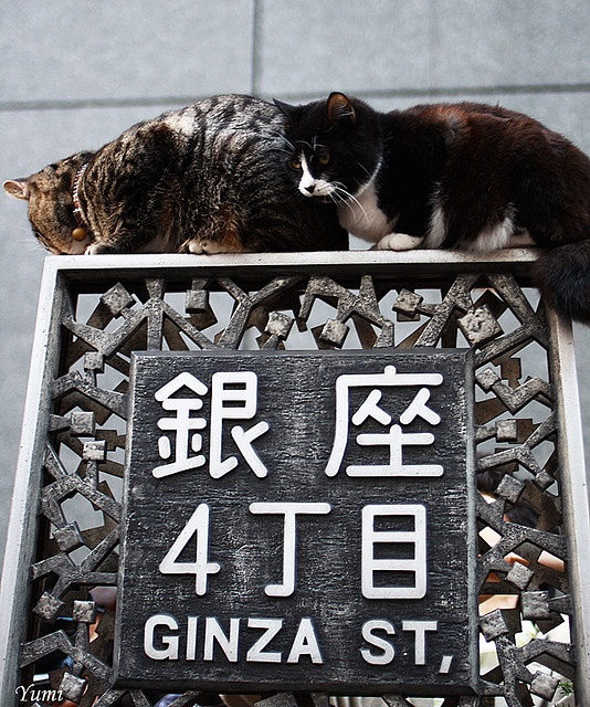 Actually those cats are abused by a man. A man put a cat on a signboards or trees, and he glad to become the center of public attention. Cats can not step out of a signboards themselves.( KO◆)
