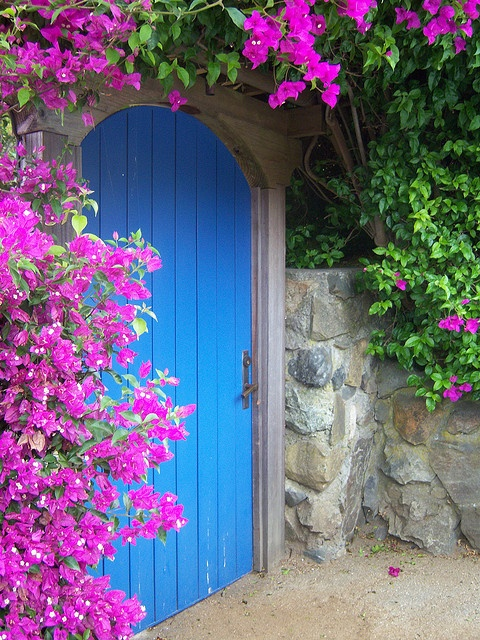 Love Bougainvillea!  Wish it grew in our cold climate.  Wow Colors with grey stone.