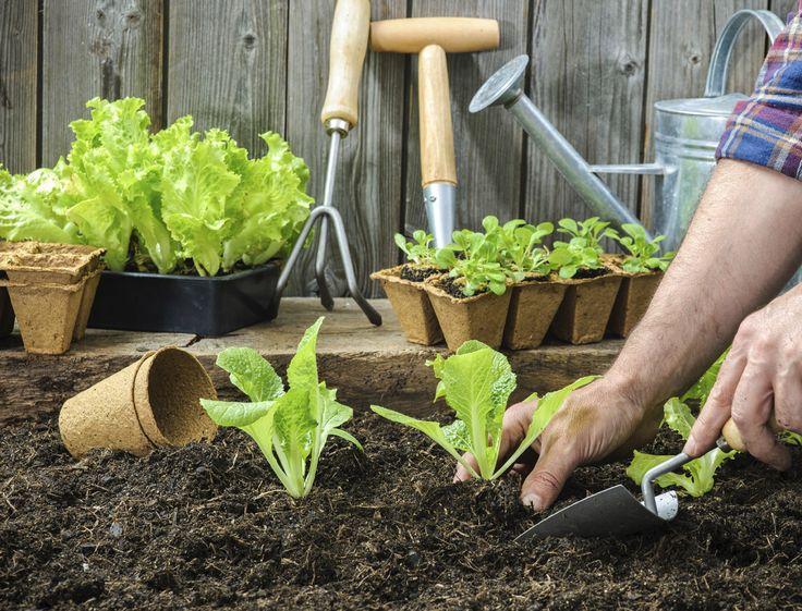 Qu'on dispose d'un bout de jardin ou seulement d'un balcon, on a tous envie de cultiver petits légumes et aromatiques. Nos conseils pour se lancer.