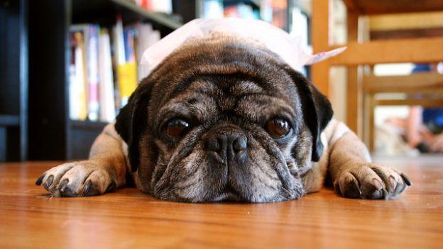 Come eliminare il cattivo odore del cane