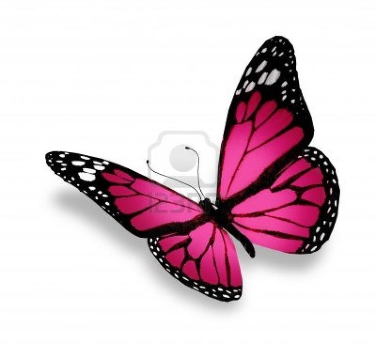 pink butterfly | Butterflies | Pinterest