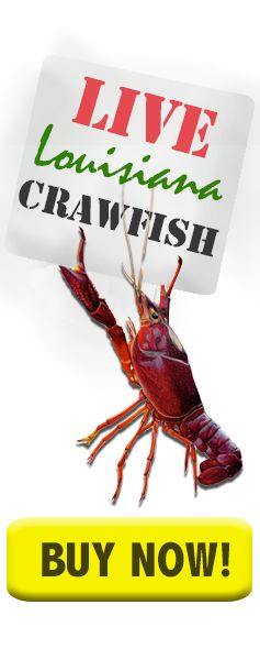 Live Crawfish for Sale| Louisiana Crawfish Shipped Direct To You