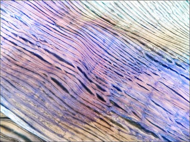 Art Threads: Silk Painting - Class 6