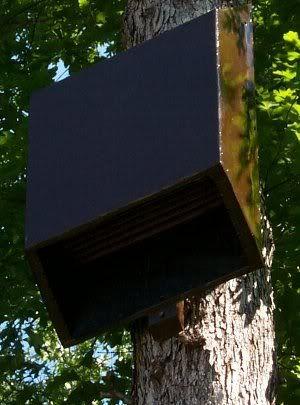 11 best bat box images on pinterest | bat box, bat house plans and