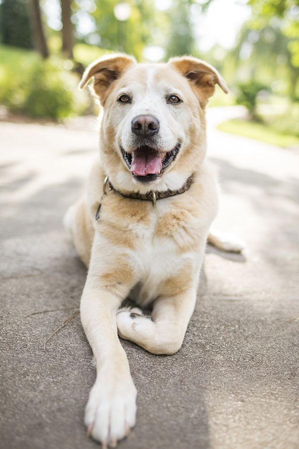 Mutts Are My Weakness Animal Photography Dog Photoshoot Mutt Dog