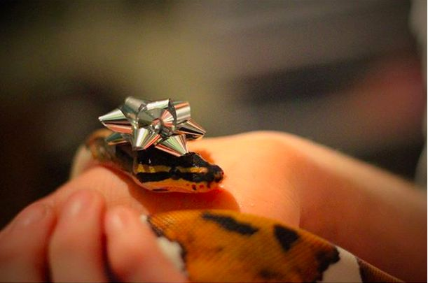 Even a simple, silver bow is a good hat on a snake. | 12 Cute Snakes In Tiny Hats Who Will Help You Conquer Your Fear