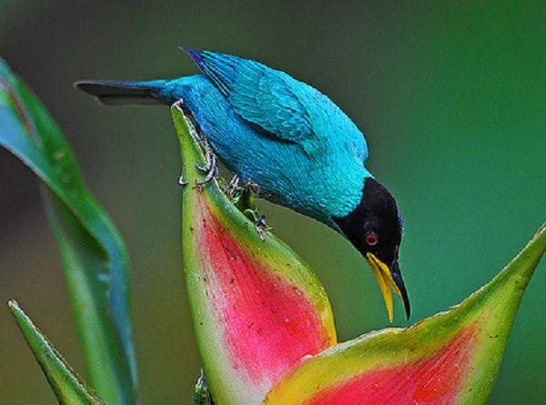 uccello tropicale fiore