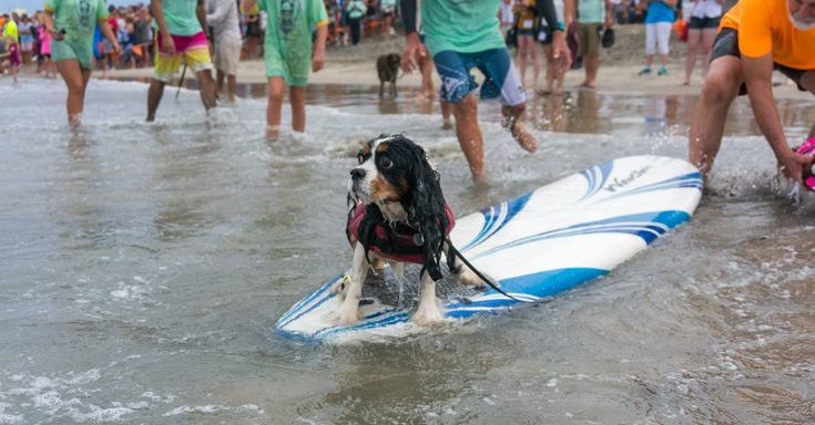 Summer Goes To The Dogs At The Dog Surfing Championship | The Animal Rescue Site Blog