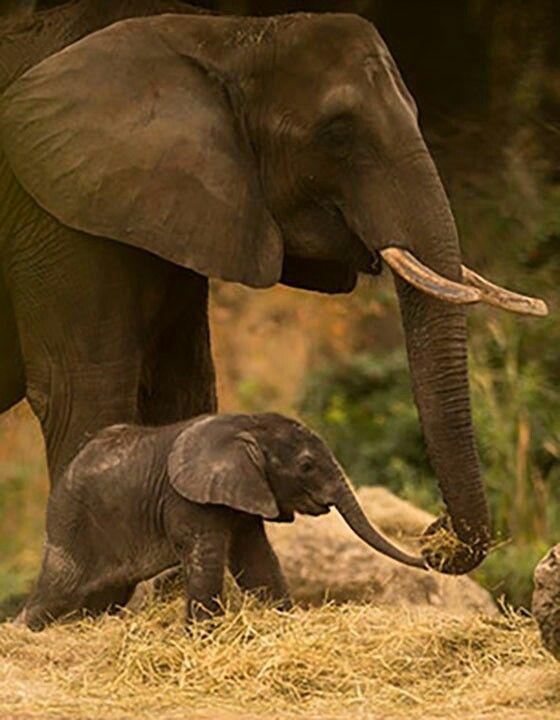 Mère et son bébé.
