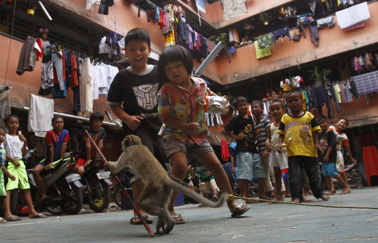 Indonesian children react to a monkey during its street performance at a slum area in Jakarta, Aug. 27. (AP Photo/Achmad Ibrahim)
