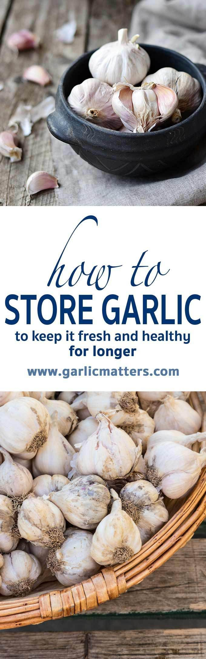 How to store garlic and keep it fresh for longer. Storing garlic correctly will extend its shelf life, preserve the flavor, prevent sprouting and dangerous for human health mould.