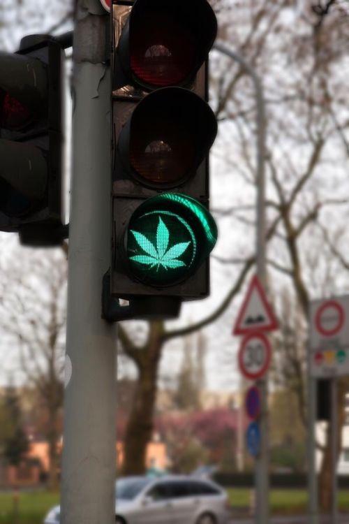 psychonilez: skunktastic:Green light Stay high guys...