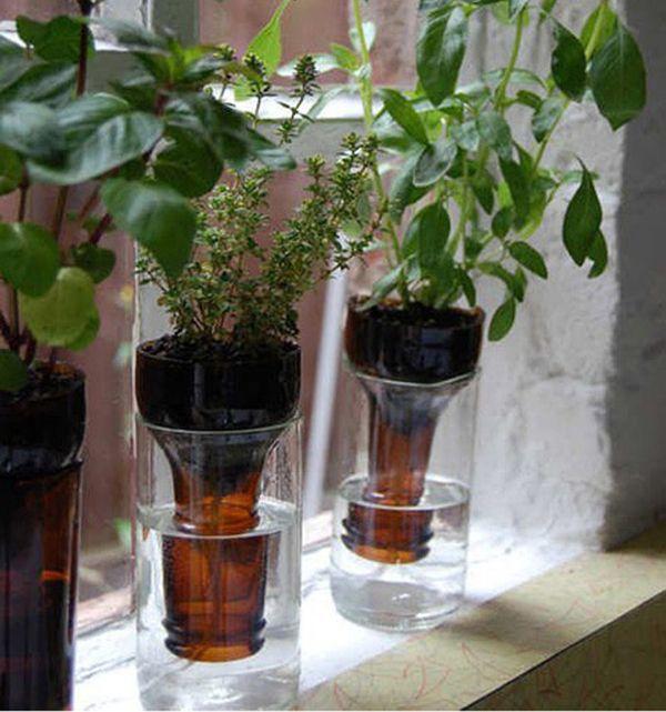 plantes en ampolles