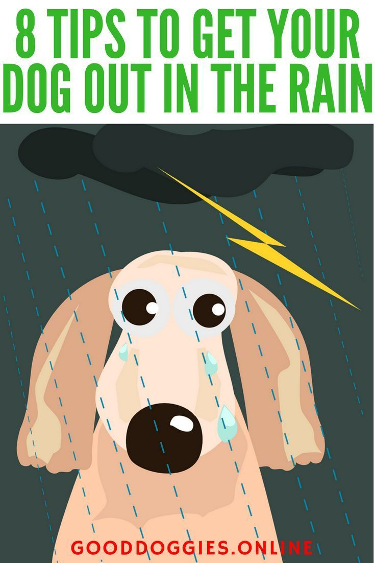 If Your Dog Won T Go Out In The Rain It Could Be For A Few Different Reasons Catch These Dog Training T Puppy Training Biting Dog Training Obedience Your Dog