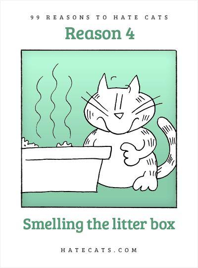 kitten seizures symptoms
