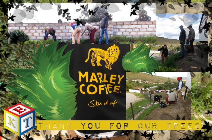 Thank you @MarleyCoffee #Knysna for the trees donated to and planted at the new Happy Faces Preschool #trees