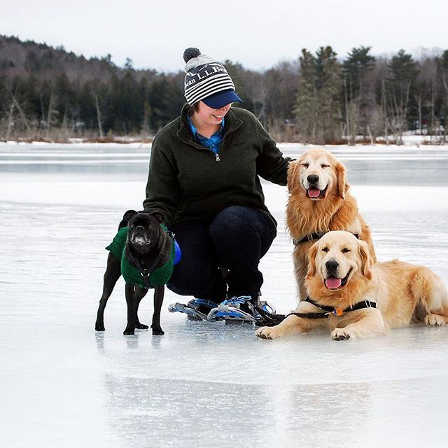 Snowshoeing With Two Golden Retrievers And A Boston Terrier Pug