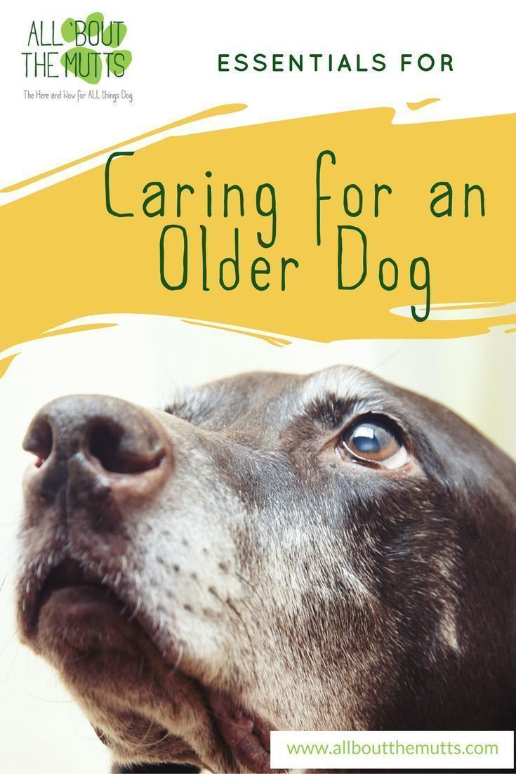 Caring For A Senior Dog Is A Little Different Than Caring For An