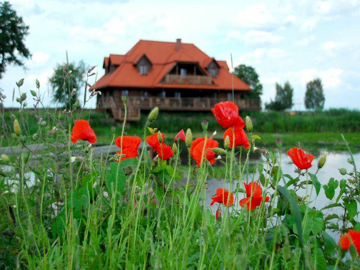 """""""Swans"""" Riverside Manor (Kiermusy, Poland)."""