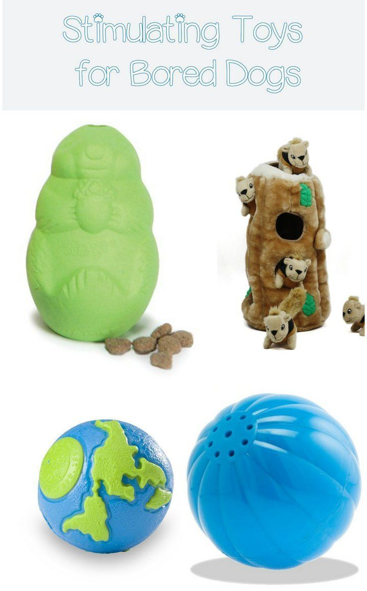 Toys For Stimulating Newborns : Best simulating toys for bored dogs dog doggies and fur