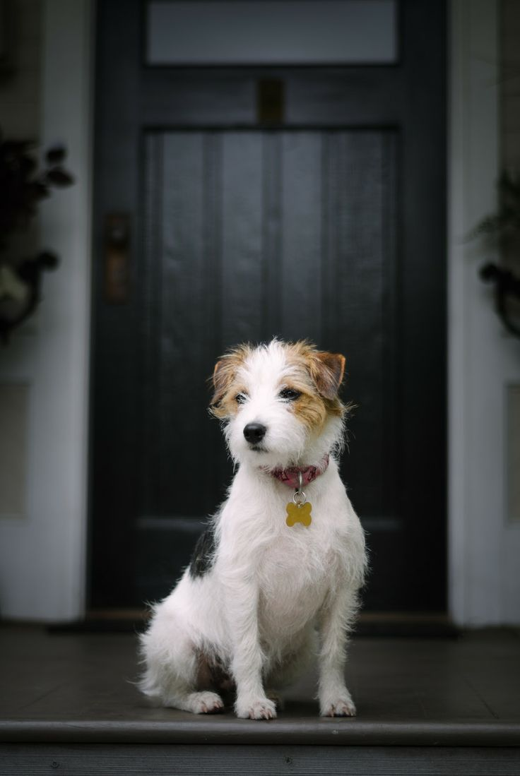 A little bit scruffy, a whole lot of cuteness...