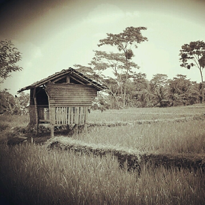 Farmer's safe house