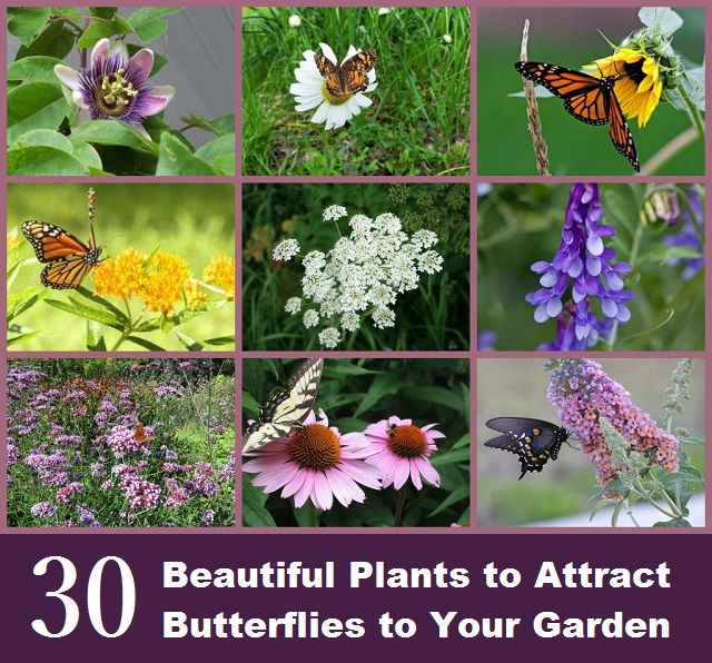 1000 Images About Beez And Other Pollinators On Pinterest Save The Bees Honey Bees And Beehive