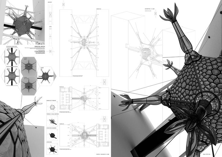Radiloaria Icosahedra es un modelo paramétrico y constructivo del protozoo que toma el nombre. Formó parte de la selección de los mejores proyectos de construcción de la Universidad Europea para la exposición de Material Galería en septiembre de 2011.