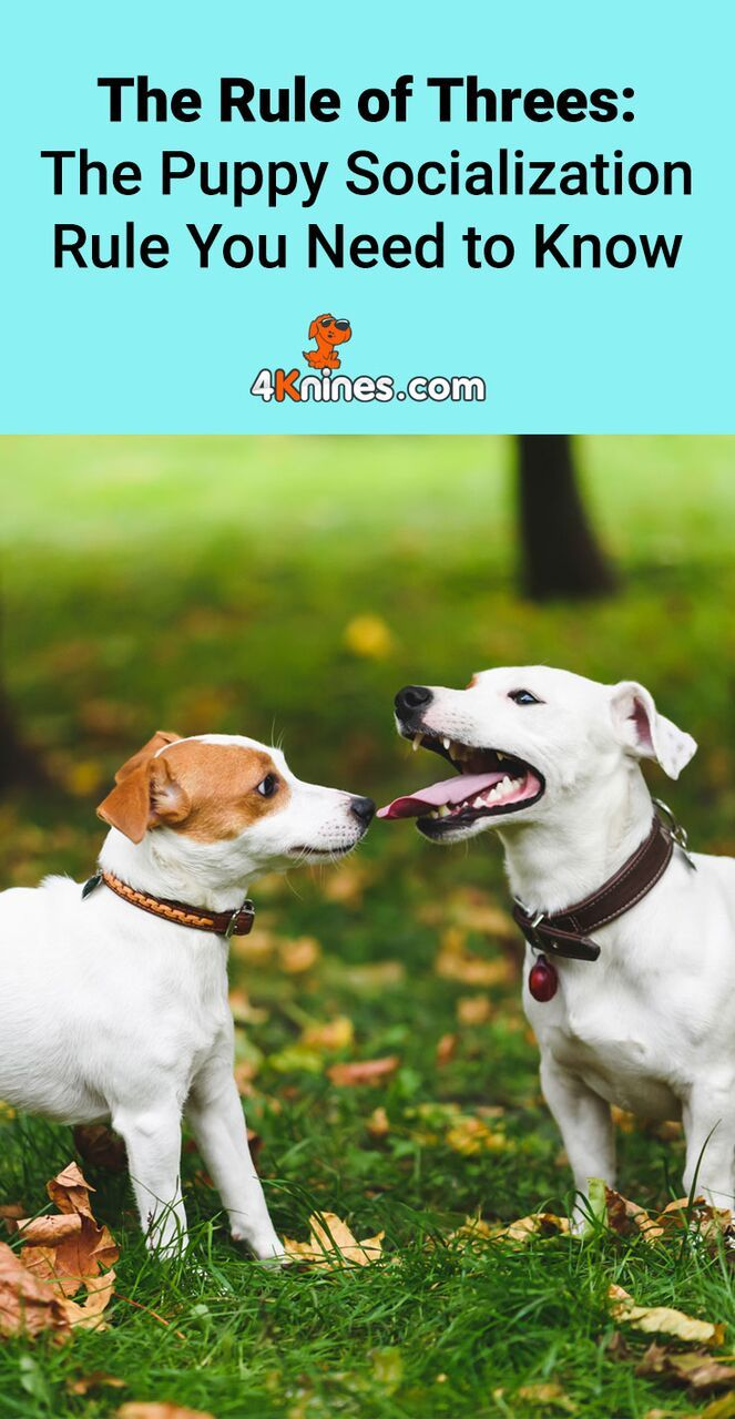 The Rule Of Threes The Puppy Socialization Rule You Need To Know