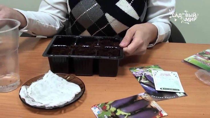 Посев баклажанов на рассаду. (Russian)