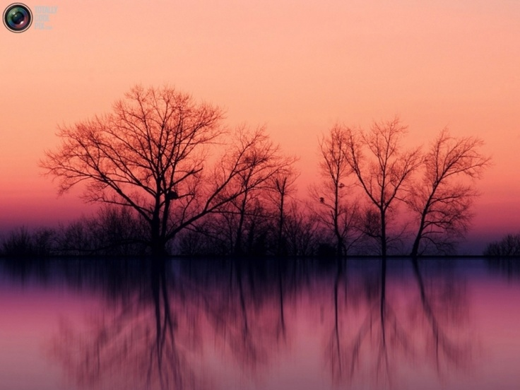 Nature: Places To Visit, Natural Photography, Purple Sunsets, Color, Silhouette, Natural Pictures, Wallpapers, Autumn Trees, Cool Places