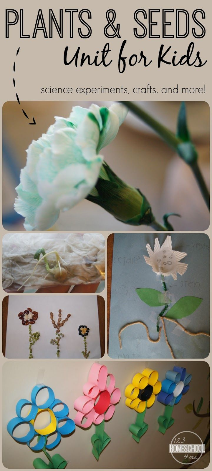 plants and seeds unit for kids with science experiments, crafts for kids, and more