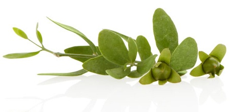 #JOJOBA  Because it so closely resembles the skin's own sebum, this oil is an extraordinarily compatible and effective moisturizer in #AVEDA's All Sensitive Body Formula and Blue Oil Balancing Concentrate.  It also helps smooth hair and is used in Damage Remedy Restructuring Conditioner.